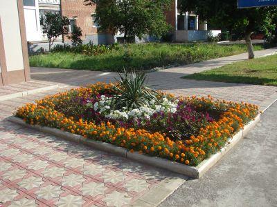 Многолетние цветы для клумб