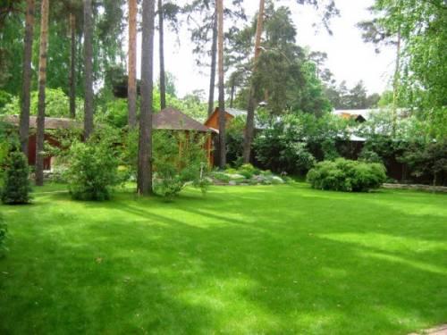 Дизайн дома фото ландшафтный дизайн