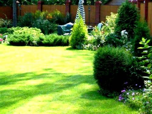 Газонная трава против сорняков