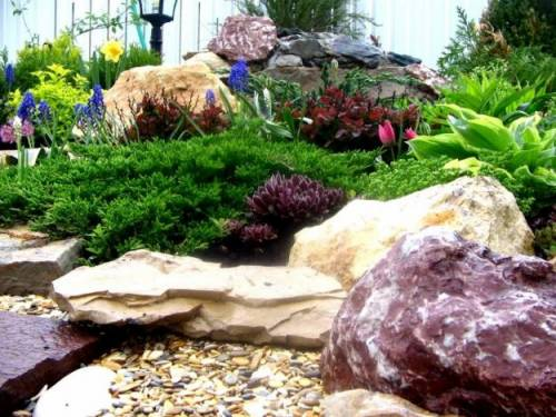 Растения для альпийской горки фото