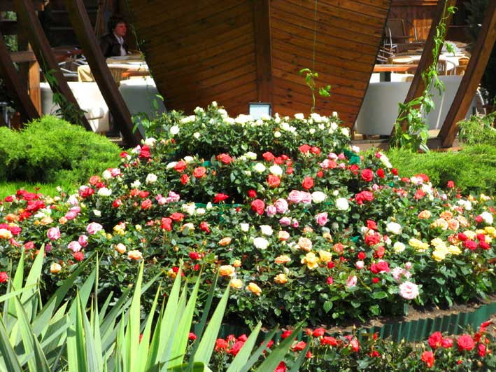 Оформление клумб в саду своими руками фото 459